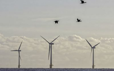 birds flying past a wind turbine